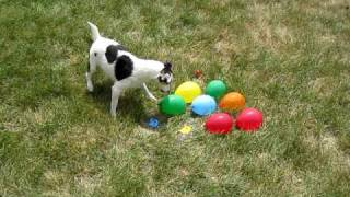 Download DOG vs. WATER BALLOONS Video