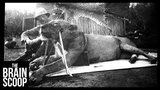 Download The Man-Eating Lions of Tsavo Video