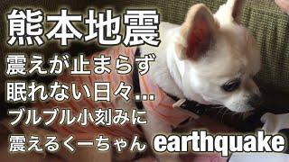 Download 熊本地震…震えが止まらないチワワのくーちゃん。Kumamoto earthquake Video
