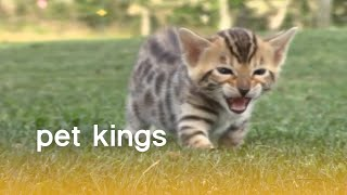 Download These Pets Just Can't Wait To Be King | The Pet Collective Video