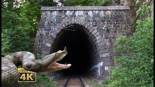 Download Rail traffic in Romania - Snakes, tunnels, bridges - National Park Jiului [4K] Video