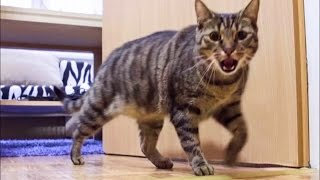 Download Cat Misses His Owner and He's Happy When Owner is Back - Funny Ending! Video