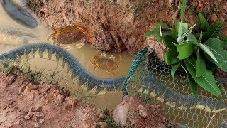 Download Smart Girl Make Easy Fish Trap To Catch Fish Crabs And Big Water Snake Video