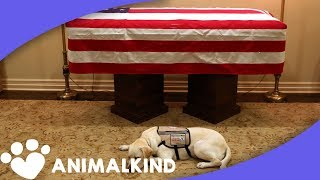 Download 6 animals who grieved the loss of their humans Video