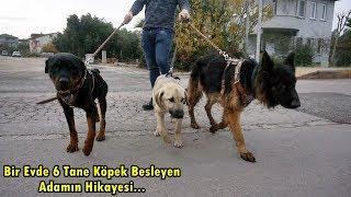 Download KÖPEĞİMİ ÖLDÜRDÜLER!! - SORU CEVAP - Alman Kurdu , Rottweiler , Kangal Video