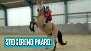 Download Voor het eerst STEIGEREN met een paard! | Vlog #32 Video