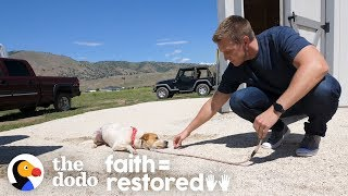 Download Feral Dog Has Never Wagged His Tail Before | The Dodo Faith = Restored Video