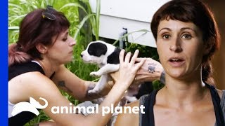 Download Stray Mother Dog Leads Rescuers To Her Puppies | Pit Bulls & Parolees Video
