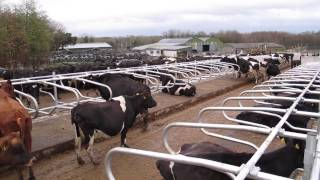 Download Farmers turning back to concrete, topless cubicles Video