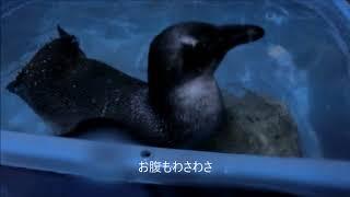 Download ペンギンになったペンギン・伊勢シーパラダイス Video