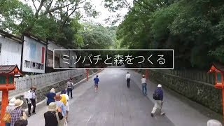 Download ビーフォレスト・クラブ Video