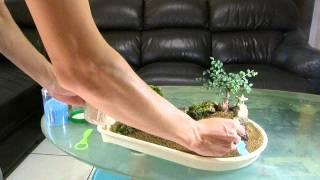 Download 自動澆水盤造景DIY Plant self watering Video