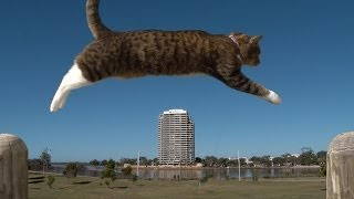 Download PURRKOUR - Didga the parkour Cat Video