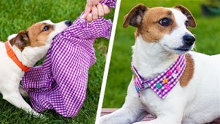 Download 13 Cute Dog Hacks! Paw-sitively Creative DIY Crafts Video
