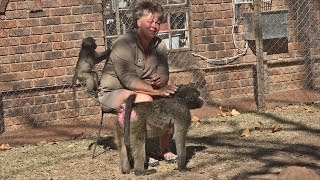 Download South Africa 2015: Bambelela Wildlife Care and Vervet Monkey Rehabilitation Centre Video