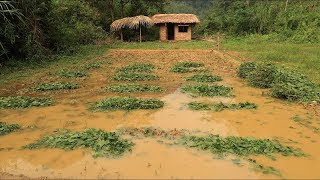 Download Primitive technology: Farmland, Fertilizer (How to make organic fertilizer) Part 3 Video