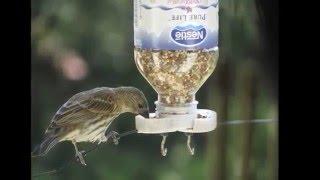 Download 50 Bird Feeder Ideas Video