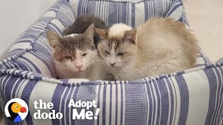 Download Bonded Shelter Cats Are Looking For A Home Together | The Dodo Adopt Me! Video