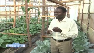 Download ENTREPRENEUR - Investing in Kenya's Agricultural Sectors Video