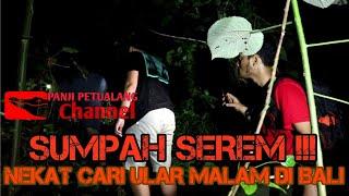 Download HERPING ULAR MALAM DI BALI Video