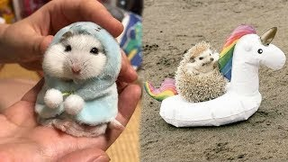 Download Cute baby animals Videos Compilation cutest moment of the animals - Soo Cute! #90 Video
