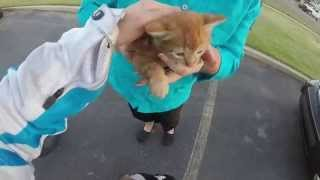Download I sound stupid, but I saved a kitten. Video