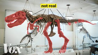 Download How scientists solved this dinosaur puzzle Video