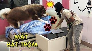 Download Giả là trộm vào nhà thử lòng Mật và cái kết không ngờ tới - Mật Pet Family Video