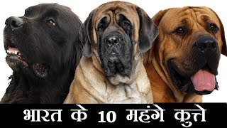 Download Top 10 Expensive Dogs in India Video