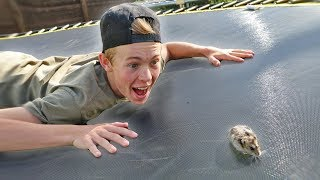 Download TEACHING MY HAMSTER HOW TO BACKFLIP! Video
