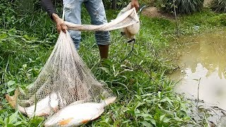Download Khmer Fishing At Siem Reap Cambodia -Cambodia Traditional Fishing Video