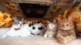 Download こたつの中の6匹猫 Cat and kotatsu 2016#1 Video