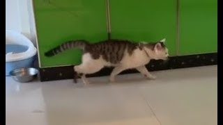 Download pranking the cat Video