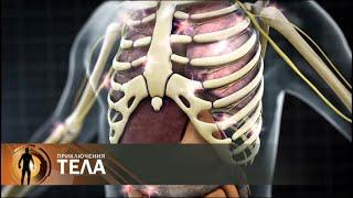 Download Испытание бессонницей | Приключения тела Video
