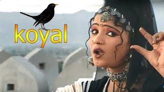 Download राजस्थान में ये प्यारा गाना जबरजस्त धूम मचा रहा है    Koyal   कोयल    रानी रंगीली Video