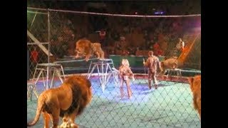 Download when circus animals attack compilation Video