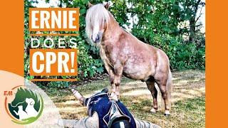 Download Albert & Ernie do lifesaving CPR! Video