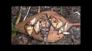Download Jungle survival - Cooking fish in the Amazon Video