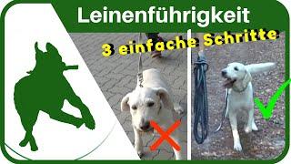 Download Hundeerziehung: dem Hund in 3 Schritten das Leine ziehen abgewöhnen - Leinenführigkeit ganz einfach Video