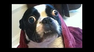 Download Funny Baby Animals Doing Funny Things 2019 Video