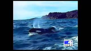 Download KOMO 4 News (ABC Seattle)″ ″Keiko Dies in Norway″ (1:04) Video
