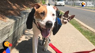 Download Rescue Dog Carries Senior Dog Best Friend On Walks | The Dodo + Clear The Shelters Video