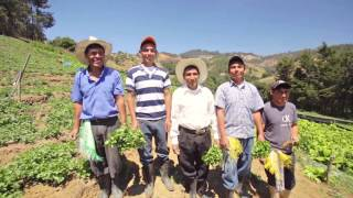 Download Caso de éxito, proveedor Walmart - Guatemala: Empresa Agrícola Don Fernando Video