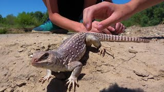 Download 4K The Lizard That's Older Than The Kids Catching It: Travel, Nature, Reptiles & Amphibians. Video
