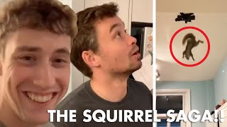 Download A Family of Squirrels Ate Holes Through my Roof. Video