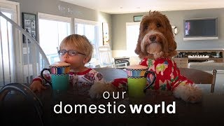 Download Our Domestic World: The Stairs & The Porch Video