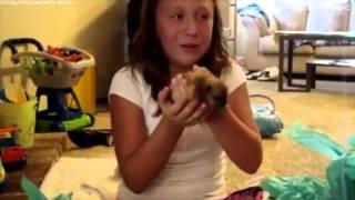 Download Реакция детей на щенков Video