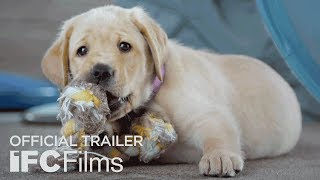 Download Pick of the Litter - Official Trailer I HD   Sundance Selects Video