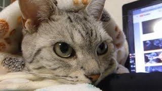 Download そっとのせ返してくれる猫 ~ものすごく愛を感じた動画❤ -Cat Touches My Hand So Gently Video