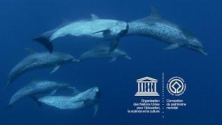 Download Le patrimoine mondial marin de l'UNESCO Video